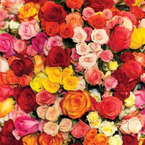 Floral #2 Patterned Vinyl